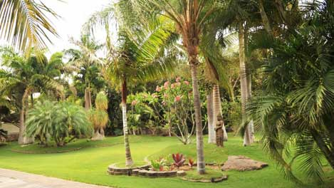 Grounds with Palms