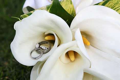 Wedding rings in calla lilies